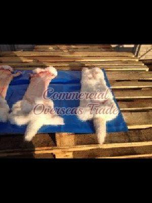 COD 8 Rabbit Skin 02