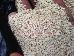 Sesame Seeds 03
