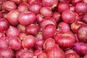 Fresh Red Onion 01