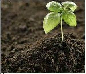Somplus Agromine Organic Fertilizer 01