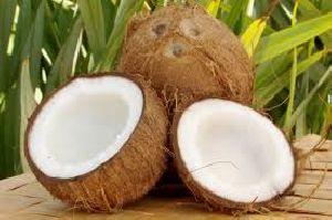Fresh Coconut 04