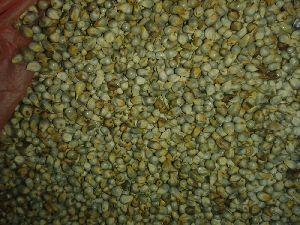 Green Millet Seeds 03