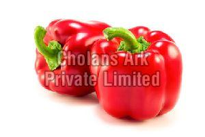 Fresh Red Capsicum