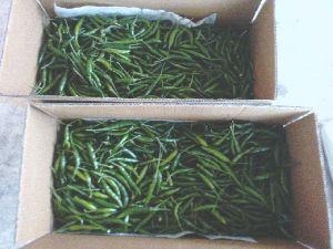 Fresh Green Chilli 05