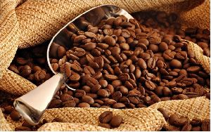 Arabica Coffee Beans 01