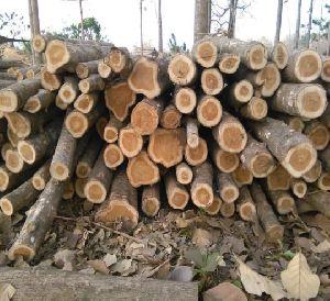 Teak Wood 03