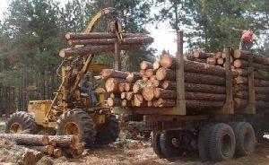 Teak Wood 07