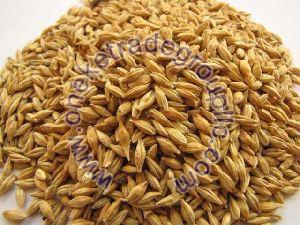 Barley Feeds
