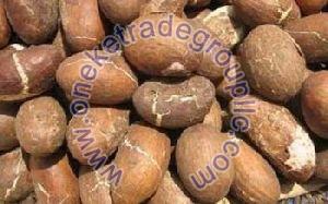 Bitter Kola Nuts