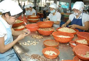 Cashew Processing Training
