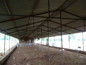 Poultry Farm Shed