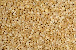 Soft White Wheat