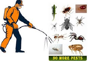 Pest Control Services in Sector 1 Manesar Gurugram