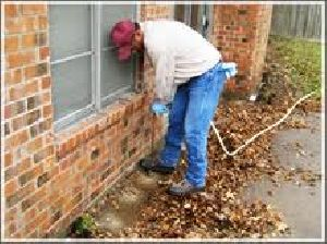 Termite Control Services in Sector 44 Gurugram