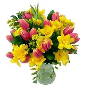 Fresh Freesia Flower