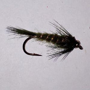 Black gnat nymph
