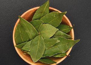 Bay Leaf 01