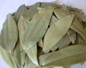 Bay Leaf 02