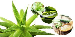 Aloe Vera Gel 10