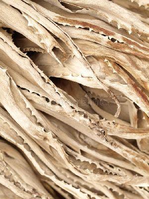 Dried Aloe Vera Leaves 03