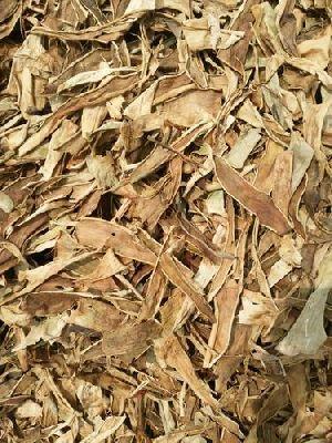 Dried Aloe Vera Leaves 08