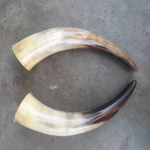 Viking Drinking Horn 04