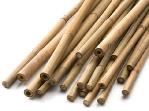 Bamboo Canes 01