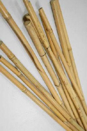 Bamboo Canes 03