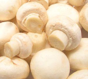 Fresh Mushroom