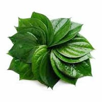 Betel Leaf Essential Oil