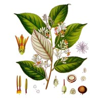 Styrax Tonkinensis Essential Oil