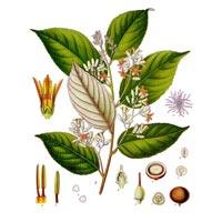Styrax Tonkinensis Essential Oil