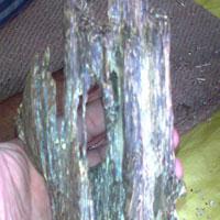Agar Wood Chips 02