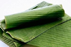 Fresh Banana Leaves