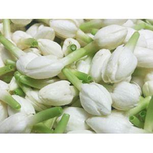 Fresh Jasmine Flowers