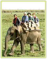 Safari Tours Services