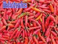 Red Chilly-02