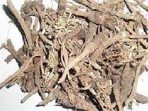 Akarkara (Anacyclus Pyrethrum)