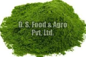 Dehydrated Coriander Leaf Powder