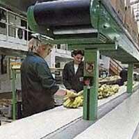 Hygienic Conveyor Belts