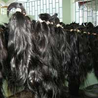 Human Hairs