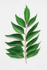 Dehydrated Sweet Curry Leaves