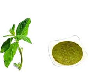 Freeze Dried Mint Powder
