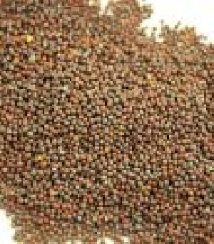 Seed Coating Polymer 02