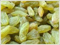 Indian Raisins