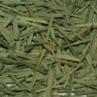 Lemongrass Leaves
