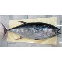 Frozen Yellowfin Tuna Fishes
