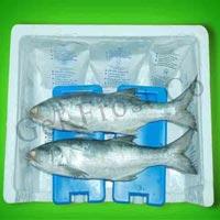 Seafood Ice Packs