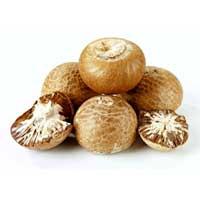 Betel Nuts