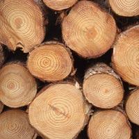 Pine Wood Logs 03